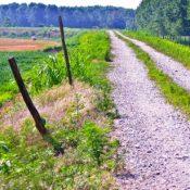 Pellegrinaggio in povertà