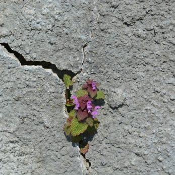 https://pixabay.com/photos/stone-nature-plant-flower-rock-1561036/